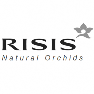 Risis Orchids
